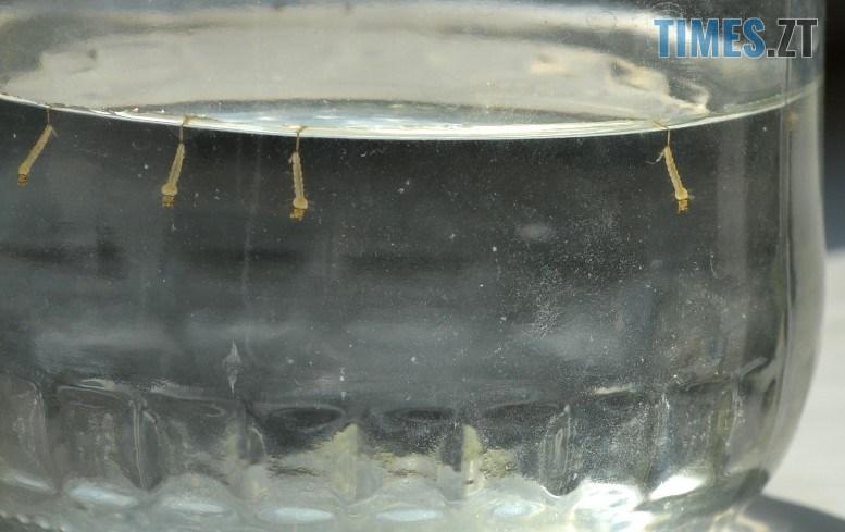 08 9 - У «питній» воді «Житомирводоканалу» живуть моторошні істоти (ФОТО, ВІДЕО)