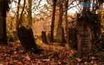 1156 150x94 - У Житомирі на проводи закриють доступ до кладовищ (ВІДЕО)