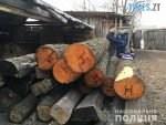 12 55 30 150x113 - На Житомирщині зафіксували черговий випадок вирубки лісу (ФОТО)
