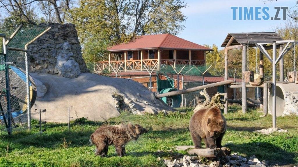 Bla skelya 10 1024x576 - Через пандемію та карантин тварини в Житомирських звіринцях можуть залишитись голодними