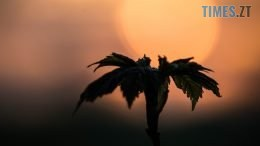 DSC 0160 260x146 - Чому захід сонця має червоний відтінок? (ФОТО)