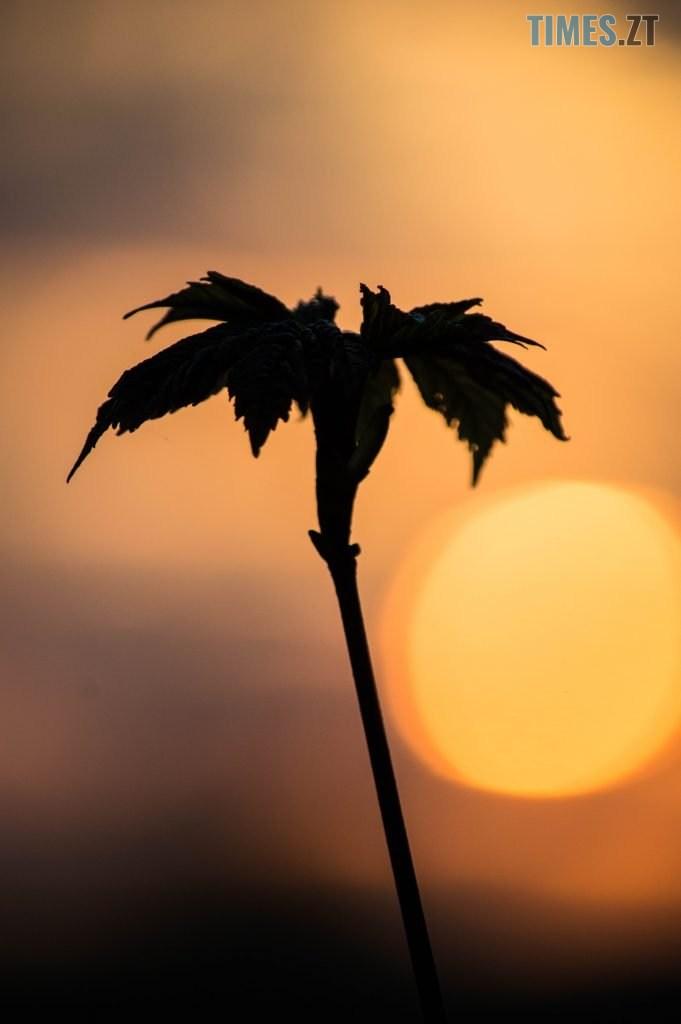 DSC 0163 681x1024 - Чому захід сонця має червоний відтінок? (ФОТО)