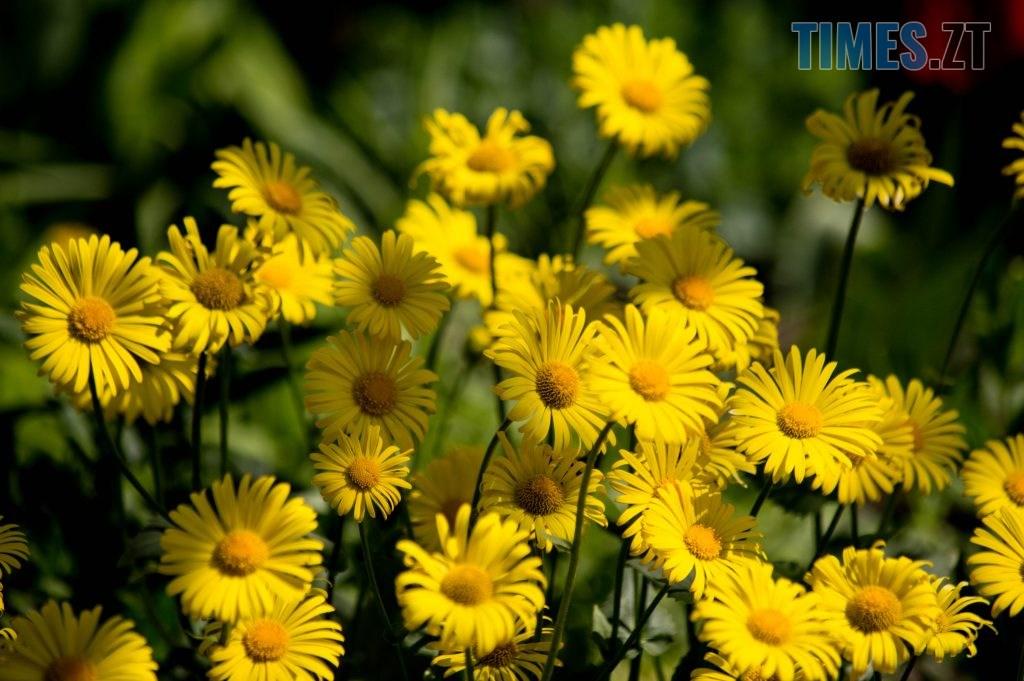 DSC 0332 1024x681 - Яка вона, весна на Житомирщині? (ФОТО)