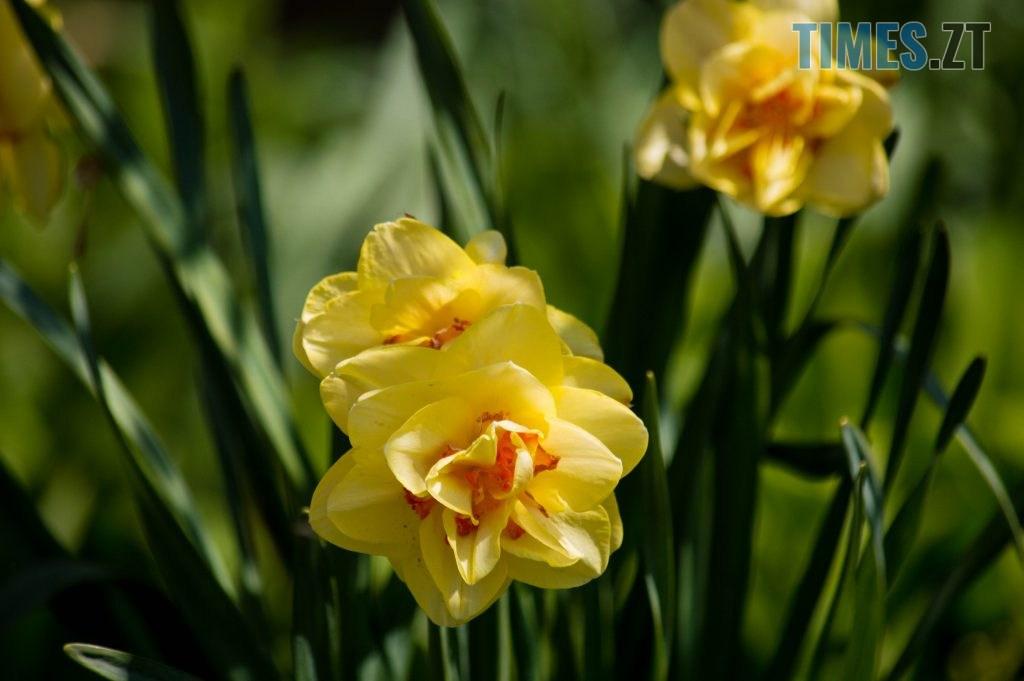 DSC 0337 1024x681 - Яка вона, весна на Житомирщині? (ФОТО)