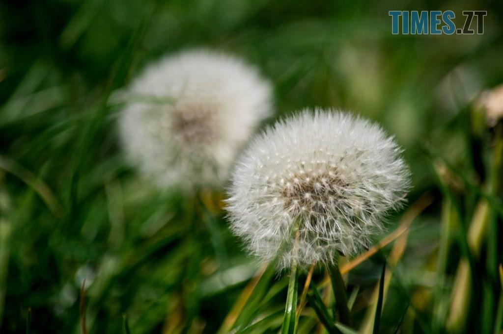 DSC 0340 1024x681 - Яка вона, весна на Житомирщині? (ФОТО)