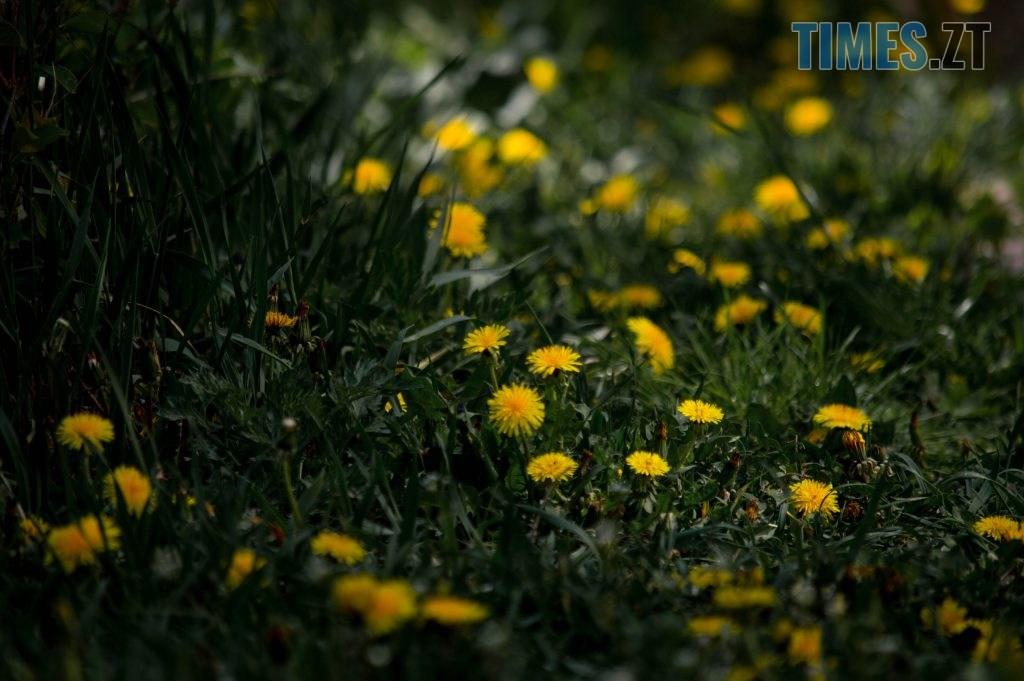 DSC 0353 1024x681 - Яка вона, весна на Житомирщині? (ФОТО)