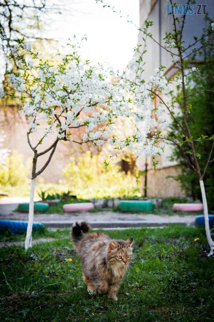 DSC 0366 681x1024 - Яка вона, весна на Житомирщині? (ФОТО)