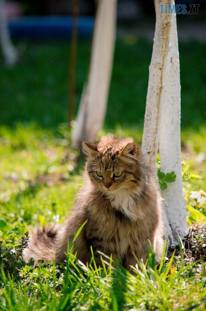 DSC 0370 681x1024 - Яка вона, весна на Житомирщині? (ФОТО)