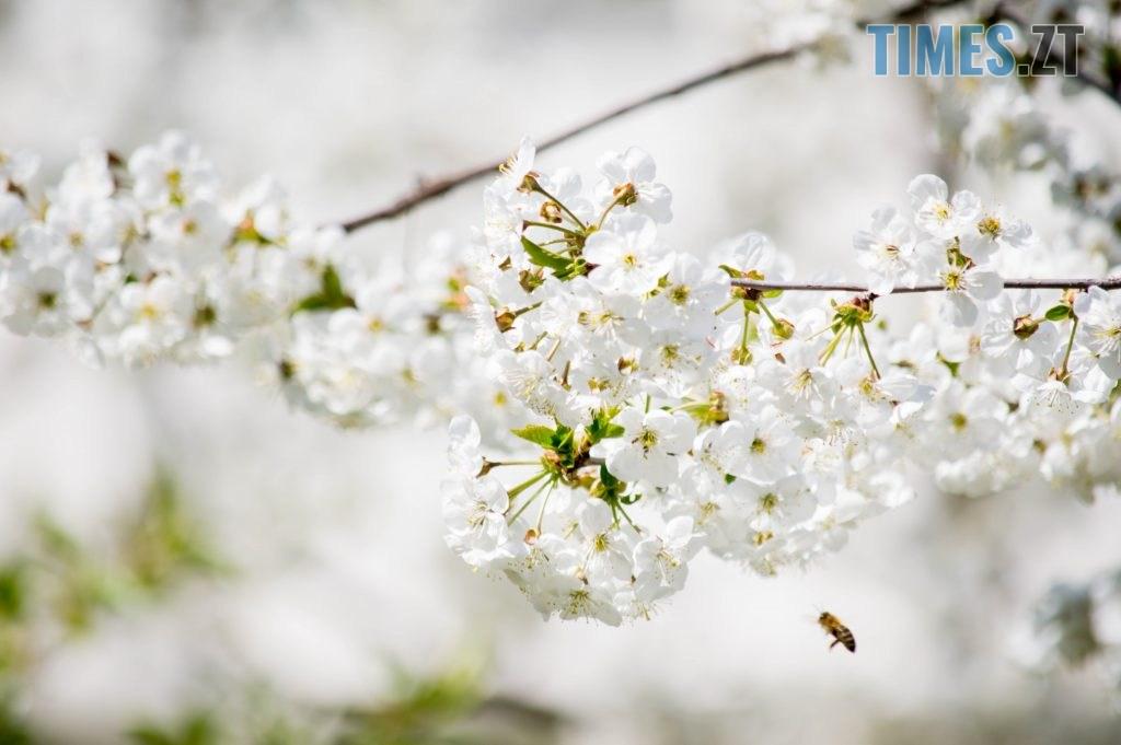 DSC 0375 1024x681 - Яка вона, весна на Житомирщині? (ФОТО)