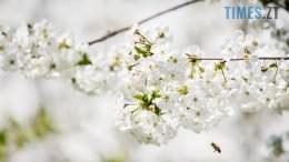 DSC 0375 260x146 - Яка вона, весна на Житомирщині? (ФОТО)