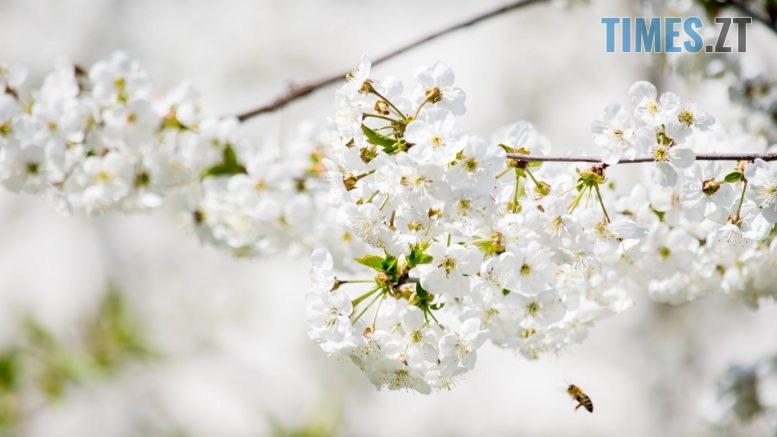 DSC 0375 777x437 - Яка вона, весна на Житомирщині? (ФОТО)