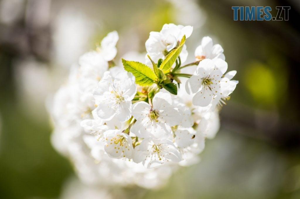 DSC 0377 1024x681 - Яка вона, весна на Житомирщині? (ФОТО)