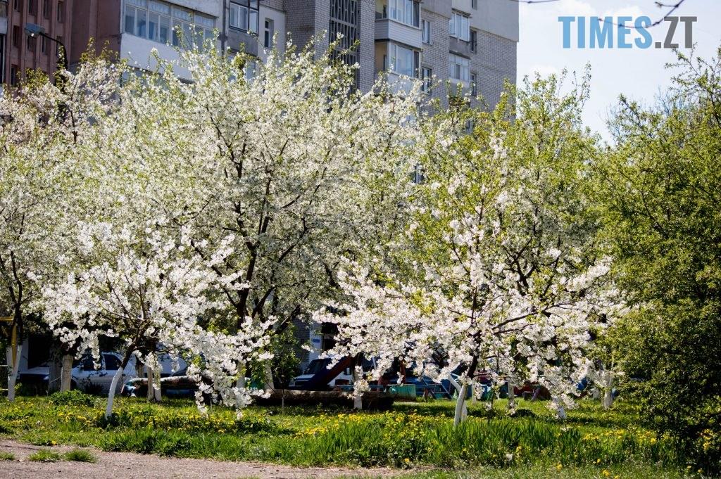 DSC 0380 1024x681 - Яка вона, весна на Житомирщині? (ФОТО)