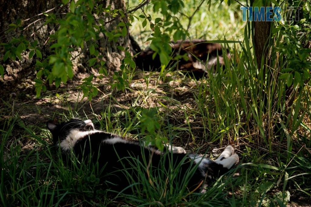 DSC 0387 1024x681 - Яка вона, весна на Житомирщині? (ФОТО)
