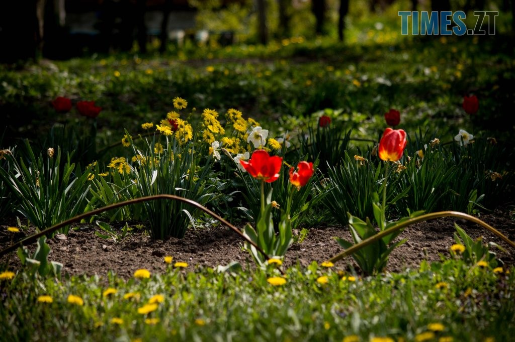 DSC 0398 1024x681 - Яка вона, весна на Житомирщині? (ФОТО)