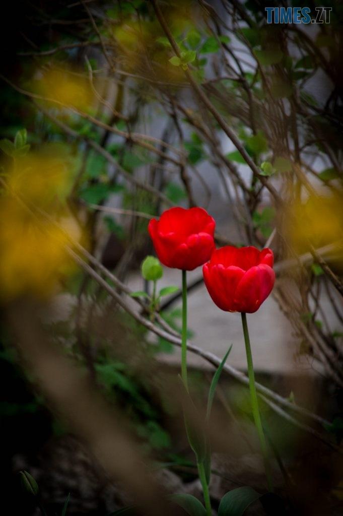DSC 0406 681x1024 - Яка вона, весна на Житомирщині? (ФОТО)