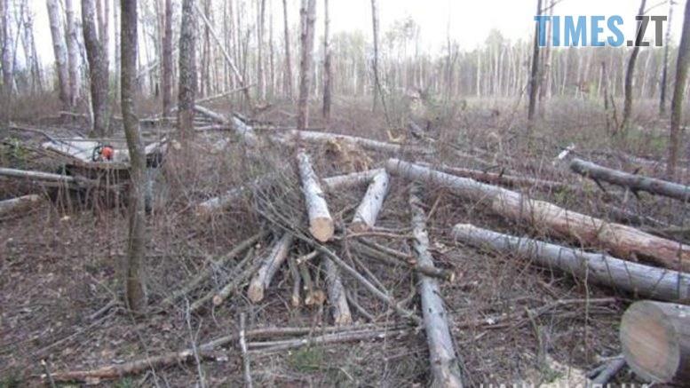 cocna 777x437 - У Новограді-Волинському правоохоронці викрили чоловіка у крадіжці лісу