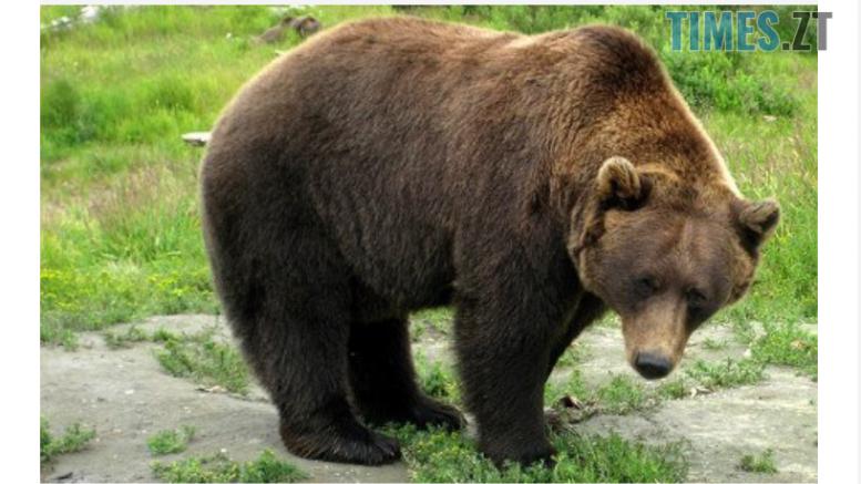 cropped Screenshot 6 e1585753696701 - Через пандемію та карантин тварини в Житомирських звіринцях можуть залишитись голодними