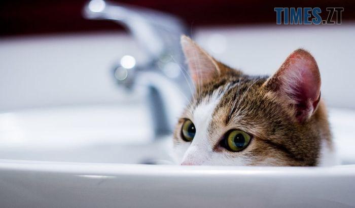 kak pomyt kota 4 1 - Де в Житомирі перекриватимуть воду 6 квітня