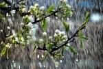 1762887 doschi zlivi grozi prognoz pogodi na nayblizhchi dni 150x101 - Цього тижня Житомир накриють дощі та грози