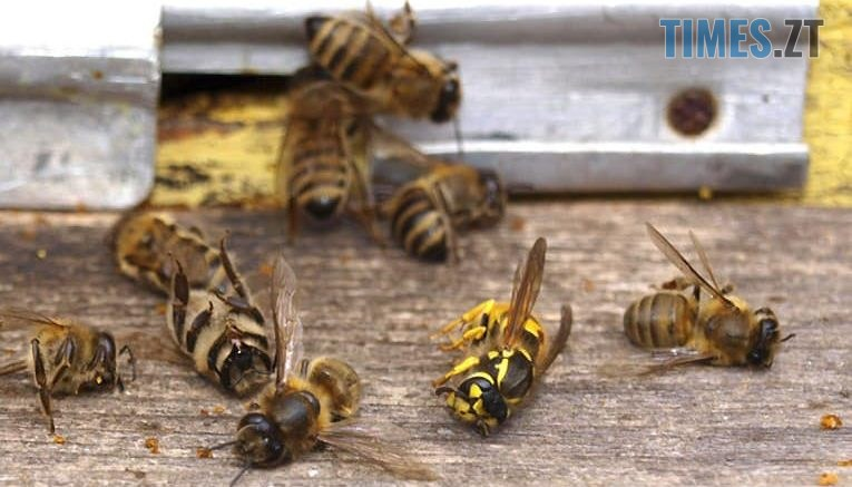 94961212 164024331750030 1931926880160579584 n 765x437 - Фермери Житомирщини б`ють на сполох: в кількох областях країни масово загинули бджоли
