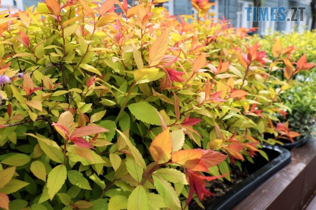 img1590135661 1024x682 - У центрі Житомира встановили лавки с декоративними рослинами (ФОТО)