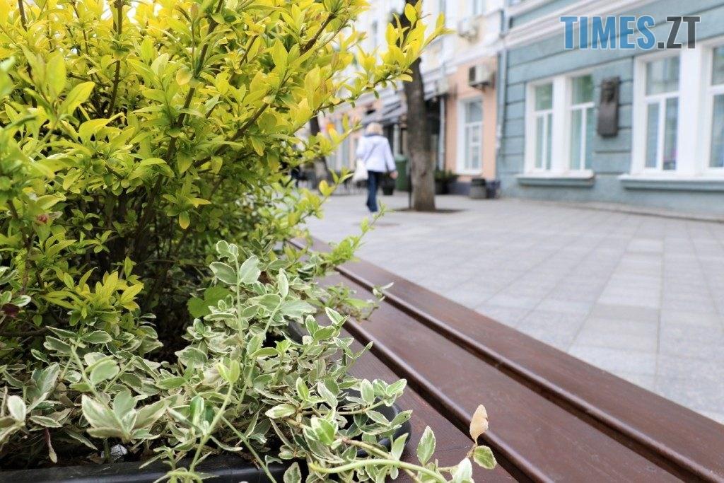 img1590135661 0 1024x683 - У центрі Житомира встановили лавки с декоративними рослинами (ФОТО)