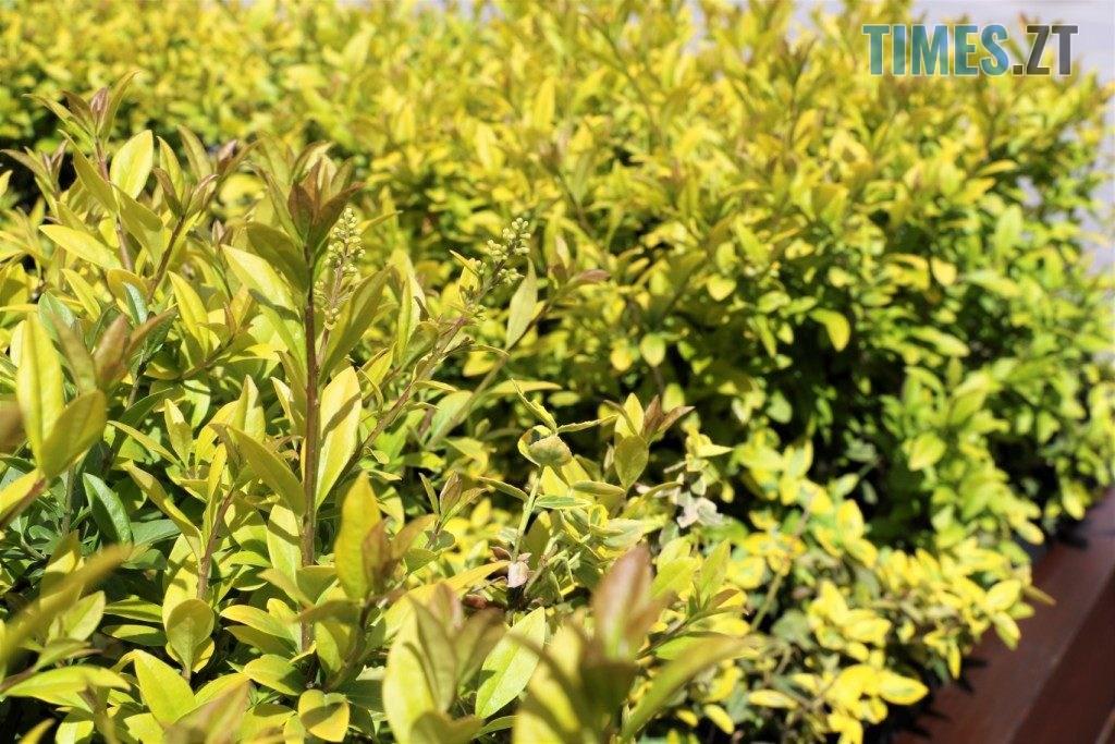 img1590135661 1 1024x683 - У центрі Житомира встановили лавки с декоративними рослинами (ФОТО)