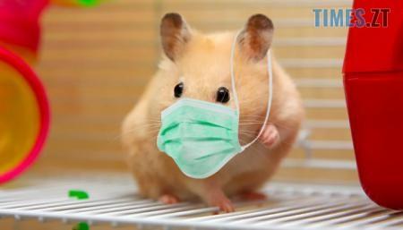 630 360 1589806788 513 19.05.20 - Вчені дослідили ефективність захисту тканинних масок на хом'яках