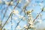regnum picture 1581834878161499 normal 150x100 - Синоптики переконані - вже наприкінці робочого тижня до Житомира завітає справжня весна