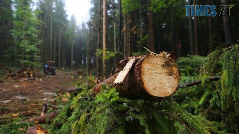 110752 1 large 777x437 - На Житомирщині викрили злочинне угрупування, яке займалося незаконною вирубкою дерев в регіоні