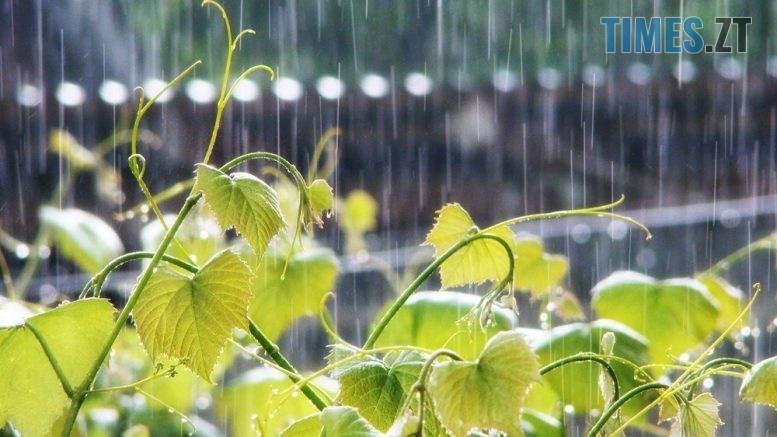 """800xdsc08557 777x437 - Житомир: на прийдешні вихідні буде прохолодна та """"мокра"""" погода"""