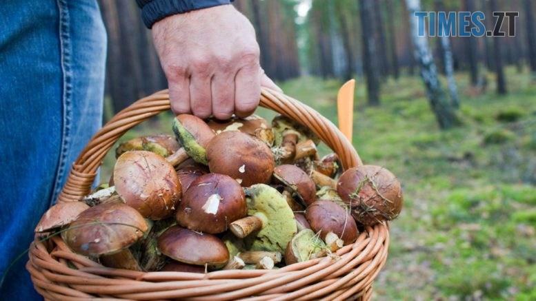 foto 777x437 - На Житомирщині два нових випадки отруєння грибами, занедужали дівчинка-підліток та 46-річна жінка
