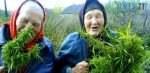 images cms image 000037598 150x73 - У жителів Житомирщини знайшли коноплю та мак