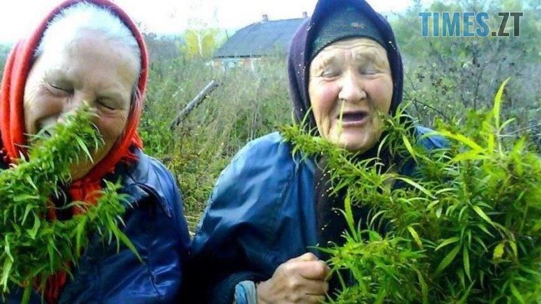 images cms image 000037598 777x437 - У жителів Житомирщини знайшли коноплю та мак