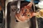 0499f7a4ce2b725967f5985caddbb219 preview w440 h290 150x99 - Жителів кількох вулиць у Житомирі повідомили про тимчасове відключення води