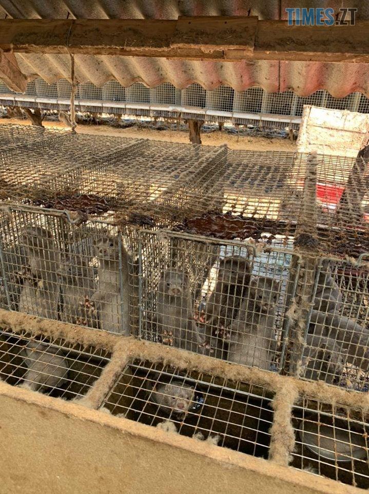 118218936 3485006338208995 643202669226557730 o - На хутровій фермі під Житомиром провели обшук - понад 43 тисячі тварин утримуються у жахливих умовах (ФОТО)