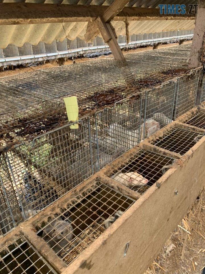 118218960 3485007014875594 4421614819241360356 o - На хутровій фермі під Житомиром провели обшук - понад 43 тисячі тварин утримуються у жахливих умовах (ФОТО)