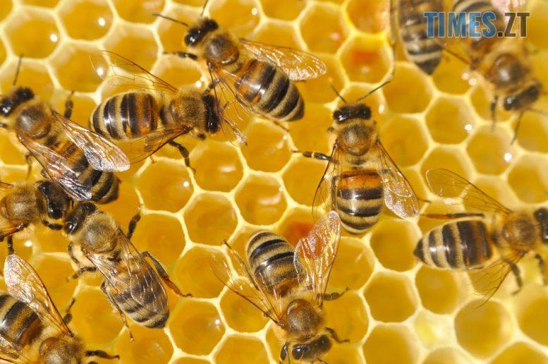 9909505eb70ad2a000c0de574293dd31 e1596783836638 - У Житомирі відбудеться ярмарок продуктів бджільництва