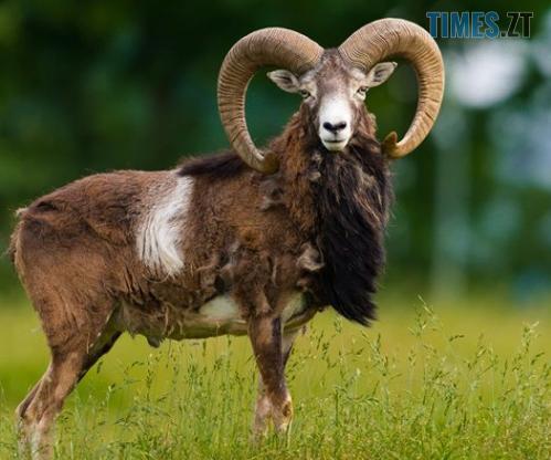 Screenshot 4 6 - Понад три десятка диких тварин незаконно утримували у вольєрі на території одного з ТОВ у Житомирській області
