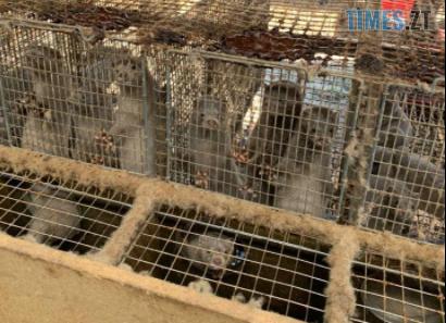 Screenshot 8 5 - На хутровій фермі під Житомиром провели обшук - понад 43 тисячі тварин утримуються у жахливих умовах (ФОТО)