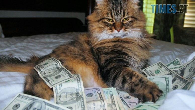cat 4 91 1 777x437 - Долар та євро ростуть: курс валют та ціни на паливо 28 серпня