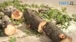 maxresdefault 150x84 - У центральному парку в Житомирі зріжуть понад 10 дерев