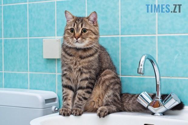 voda dlya koshek - Проблеми із тиском і відключення води, - у водоканалі назвали вулиці, де ремонтують водогін