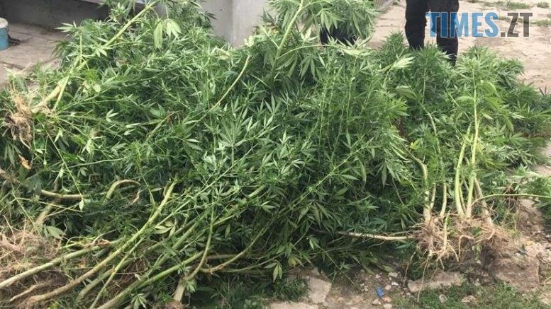 112424 777x437 - У Новоград-Волинському чоловік повідомив поліції про крадіжку, а сам попався на вирощуванні коноплі