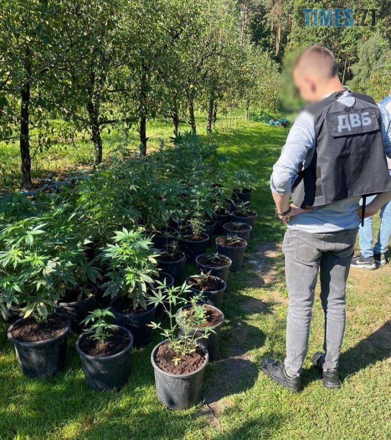 119078851 3295060123916454 6693948315188960160 o e1599638323392 - У Житомирській області затримали наркодилера, який вдома облаштував плантацію з марихуаною (ФОТО)