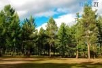 964406 chi bude proyav pryamoyi demokratiyi andriyu 150x100 - В Оліївській ОТГ арештували 570 га лісового фонду