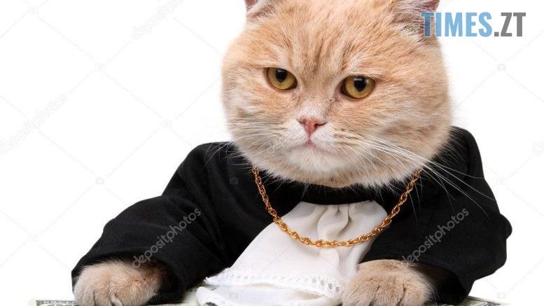 depositphotos 4328439 stock photo red cat sitting on the 777x437 - Гривня продовжує падіння: курс валют та ціни на паливо 2 вересня