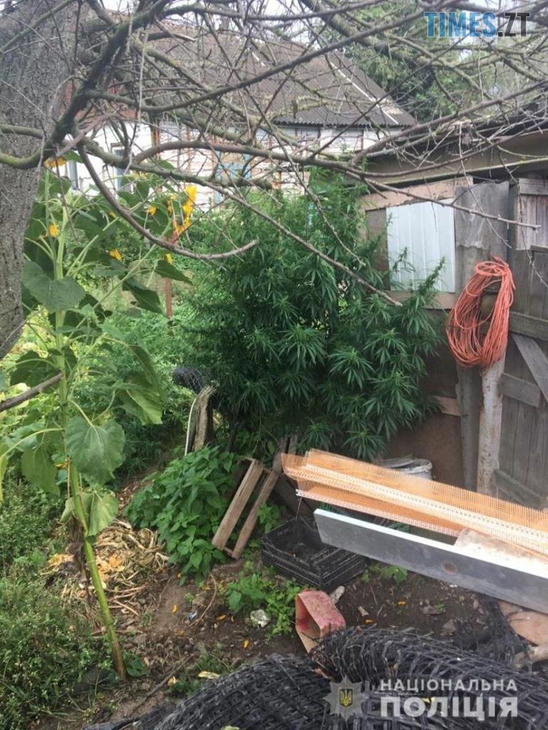 index2  1 768x1024 - У Новоград-Волинському чоловік повідомив поліції про крадіжку, а сам попався на вирощуванні коноплі