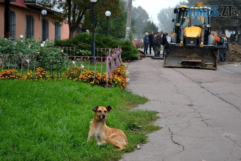 16 - Олександр Павленко: «На Гагаріна екологічна катастрофа, третина міської каналізації тече в землю!»